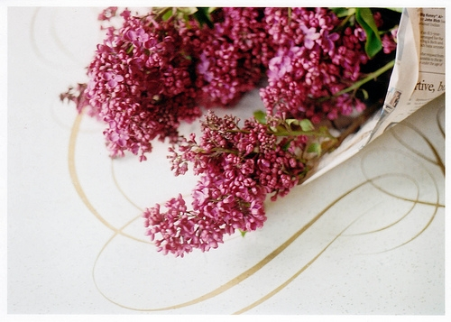 lilacs on http://weheartit.com/